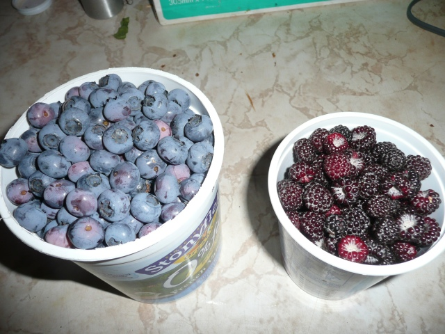 Blueberries and Black Raspberries.